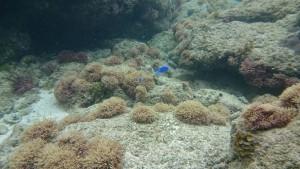 水中カメラなんてもういらない、スマホで水中撮影は簡単にできる。Xperia Z3 compactなら防水ケースさえいらない!